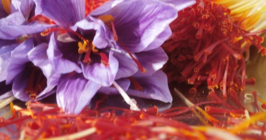 صادرات زعفران ایرانی به آمریکا پس از ۱۵ سال
